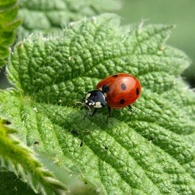 Nettles Herbs Natural Medicine Spring Detox Nutrition Stoke Newington N16 Naturopathy