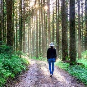 SH Health Walking forest path