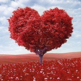 SH Beauty Tree Heart