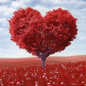 SH Beauty Tree Heart