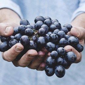 SH Health Grapes