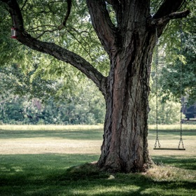SH Health Tree Swing