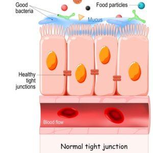 SH Healthy gut